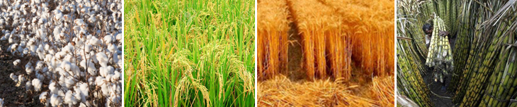 Abundant Biomass and Feed Resources in Pakistan